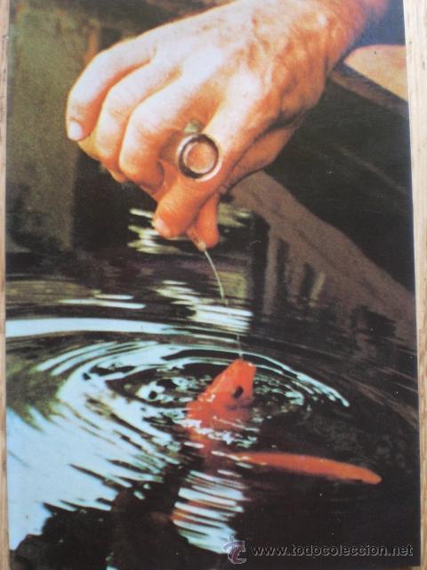 peces en el río