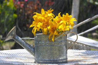 Obtener Precipitación Máxima Diaria