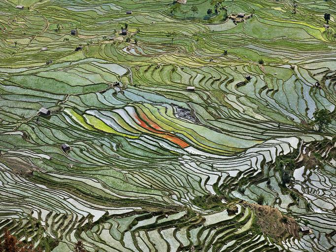 Watermark_rice terraces